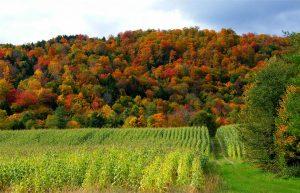 Autumn Farm - Stanley Zimny CC-2.0