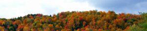 autumn farm-stanley-zimny