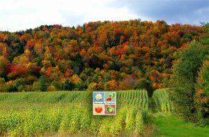 Autumn Farm by Stanley Zimny
