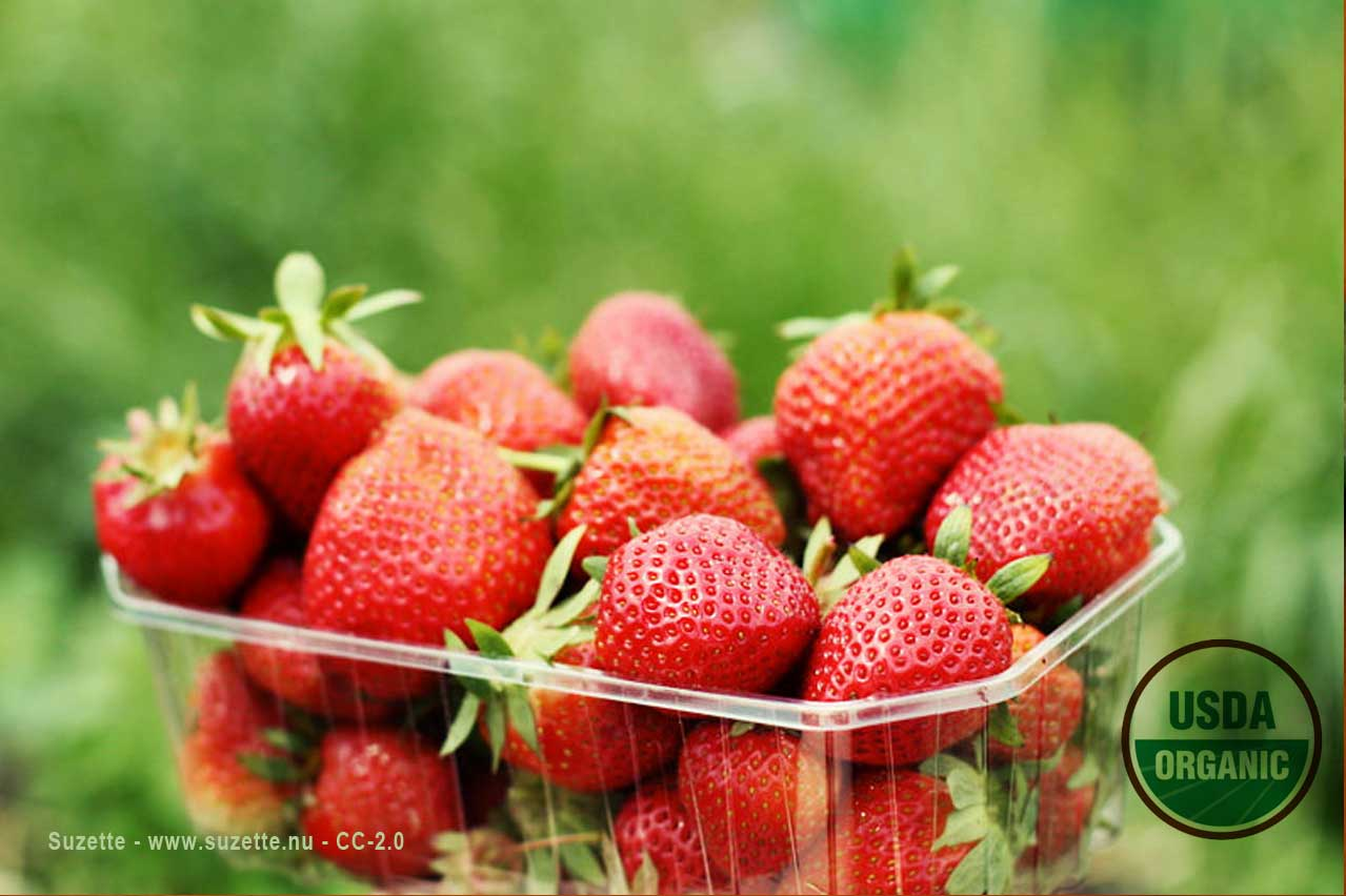 organic strawberries by Suzette cc-2,0