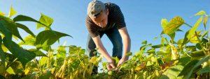 Agriculture by USDA.gov