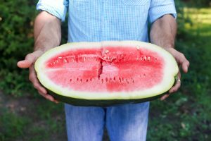 Bradford Watermelons - Courtesy of the Bradford Farm