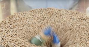 Dangers of grain bins